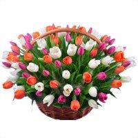 Bouquet 101 Tulip!