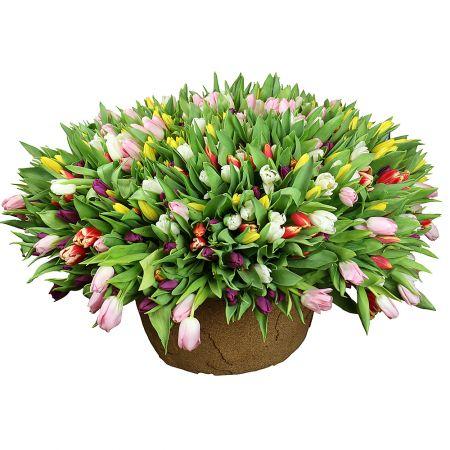 Bouquet  501 tulip
