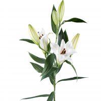 Bouquet Lily white piece