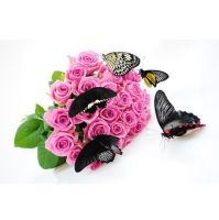 Product Pupa of butterflies - the mystery of birth butterfly.