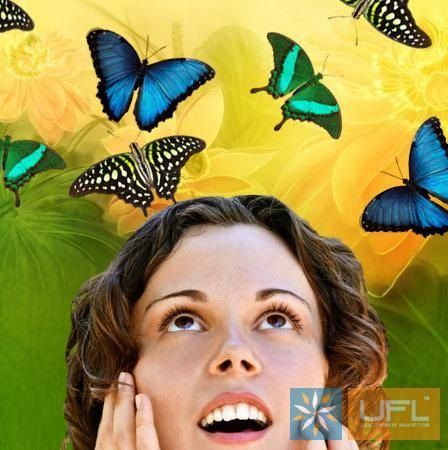 Product Butterfly Salute